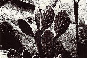 FineArt_CactusInGranite_3.jpg